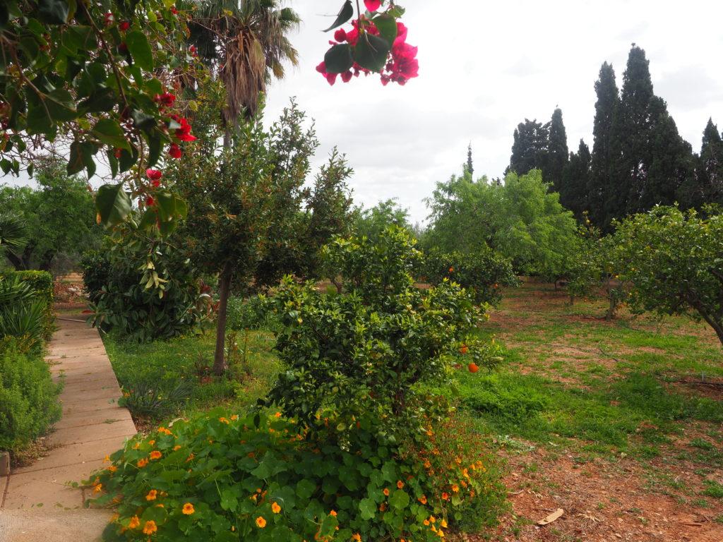 Rustic house (finca) near the village – Bunyola area – Santa Maria del Cami Majorca with pool, garden, fruit trees