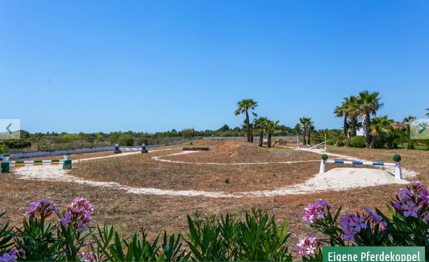 Equestrian property in Binissalem Mallorca